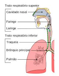 laringe,faringe